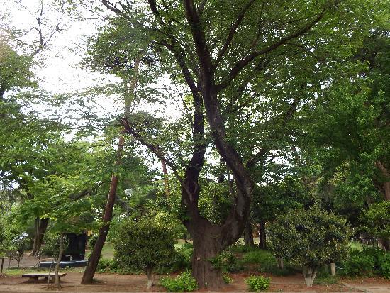 平和の塔の隣りにある面白い樹木