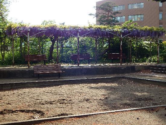 清瀬中央公園のベンチの上には見事な藤の花