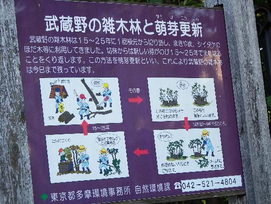 武蔵野の雑木林と萌芽更新についての説明
