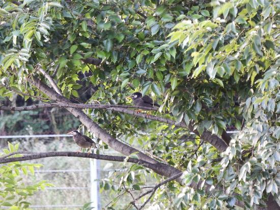 各木の枝に乗っかるムクドリたち