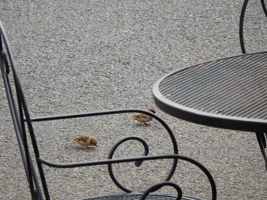 エミュウのテラスに寄ってくるスズメたち
