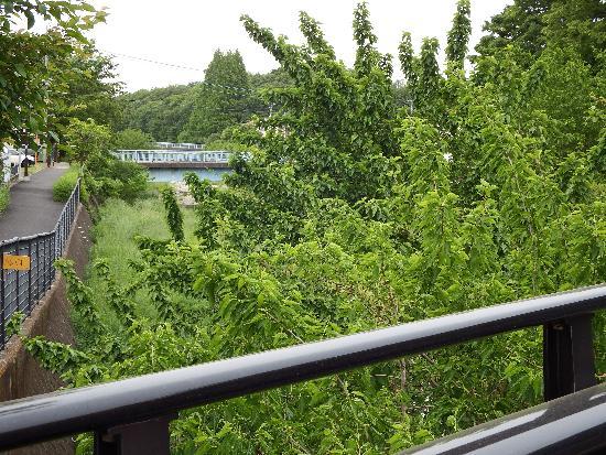 柳原橋より薬師橋(下流)方面の景色