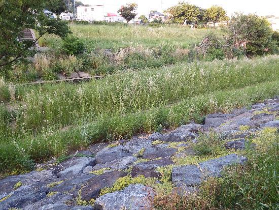 岩の堤防に黄色の苔のような花