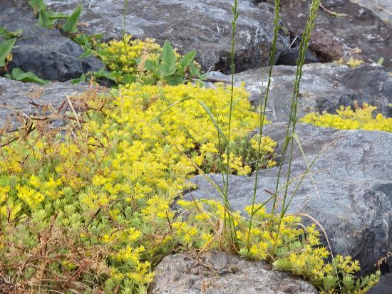 苔のような花をカメラで拡大したもの