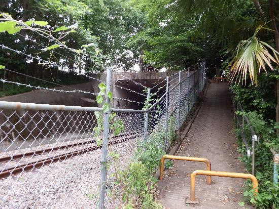 秋津公園の横に1本の線路