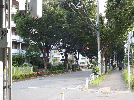 けやき通り(清瀬市清戸4丁目アパート付近)