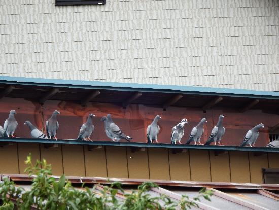 伝書鳩の家