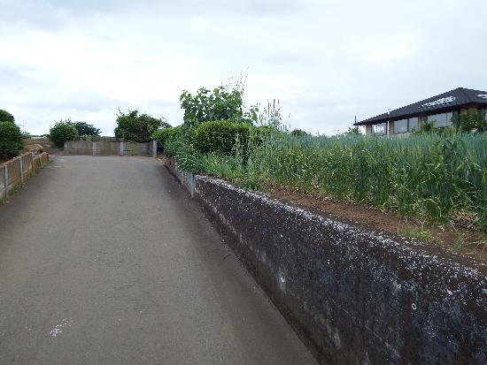 農道入口付近