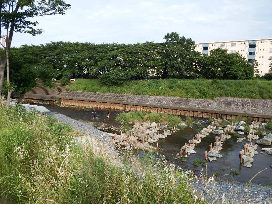 柳瀬川にて子供たちが川遊びを楽しんでいる姿