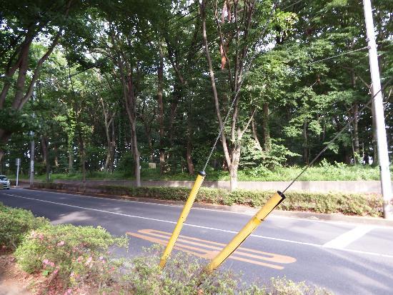 清瀬市清戸4丁目の広い雑木林