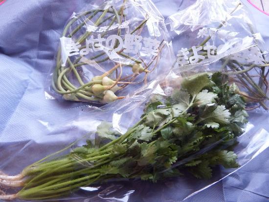清瀬の野菜直売所で見つけたパクチーとにんにく芽