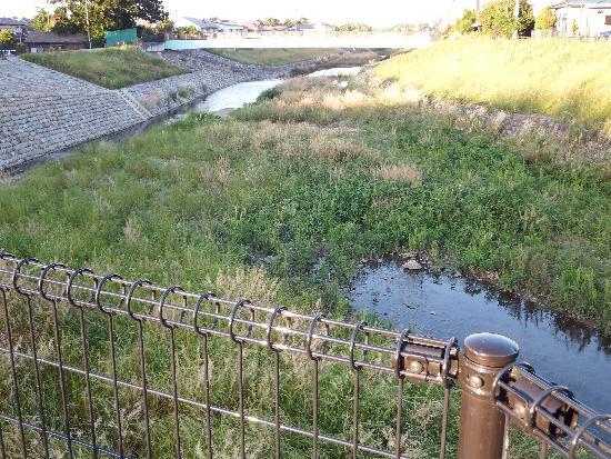 空堀川遊歩道くるまや橋付近