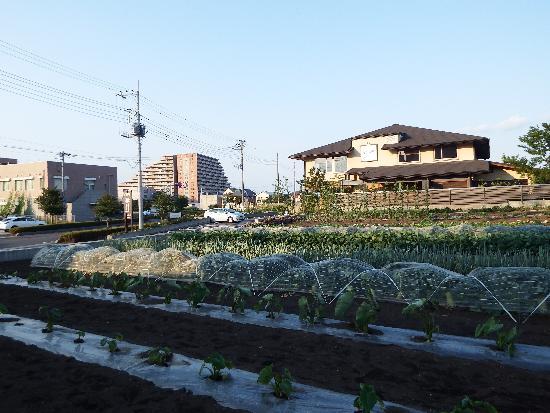 所沢和田遺跡通りにあるカフェレストランなごみ野前に広がる畑
