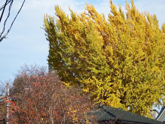 園福寺の木