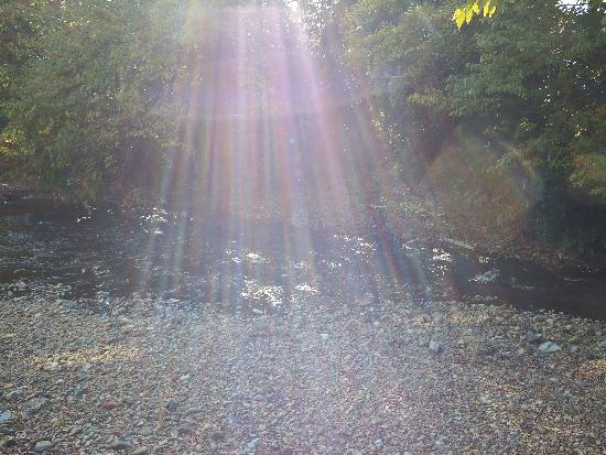 太陽の光を浴びた柳瀬川