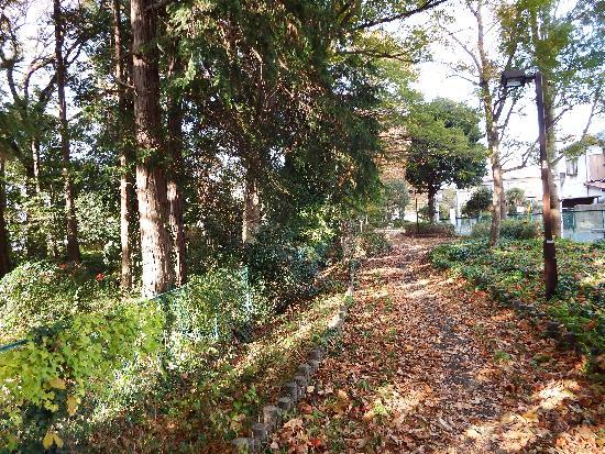 野塩八幡神社の近くの雑木林
