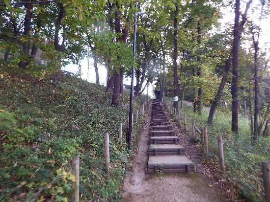 清瀬中里緑地保全地域の階段