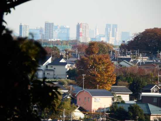 和田の森より新宿高層ビル郡を望む