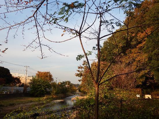 秋の清瀬の森と空堀川との景色