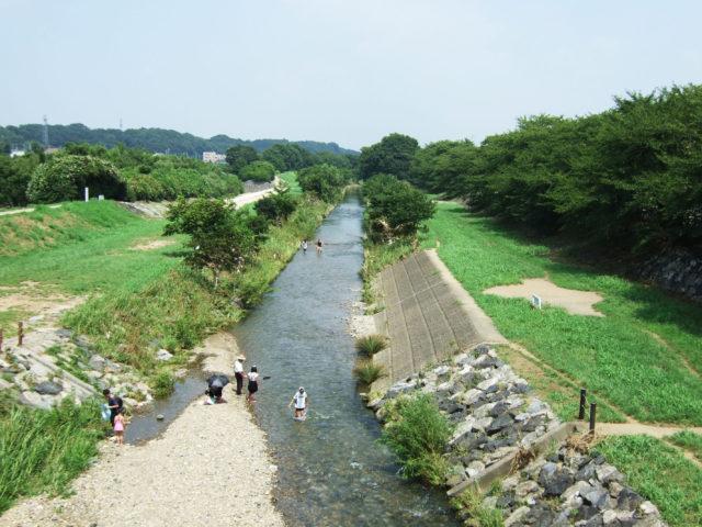 夏の柳瀬川(東京都清瀬市)